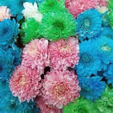 """Букет """"Цветные хризантемы"""""""