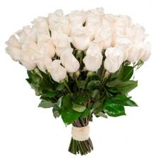 Розы белые Голландия